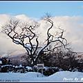20091218-1222 北海道之旅