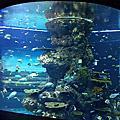 【新加坡】 Marine life park