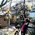 2014年12月28日陽明山大樹下小饅頭、擎天崗