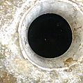 學校機關-抽水肥