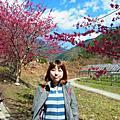 2014-02-17 武陵農場