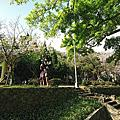 陽明山前山公園的紫藤和櫻花
