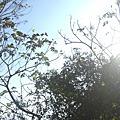 山服。秋訪桃山