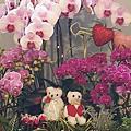 台南新營蘭花展
