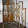 屍體博物館