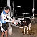 四面佛另牛奶之旅