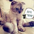 [寵物]我家貓咪~~彎彎萌照