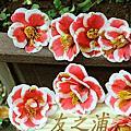 花卉試驗中心茶花展