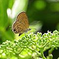 飛舞的小灰蝶