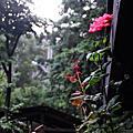 山行玫瑰與自然步調