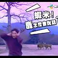 緯來日本台─鹿男的異想世界廣告