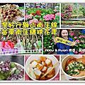 南庄繡球花季