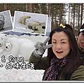 北極熊動物園