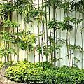 江夏景觀設計/0903092008/庭園造景/景關設計/景觀工程/戶外木構造/戶外南方松地板/南方松採光罩