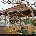 南方松施工/南方松工程/戶外木工程/景觀木構造