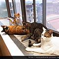 貓貓-神奇脫毛梳