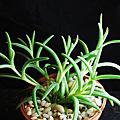很Q很像麟片表面的可愛植物........麗晃