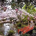 春日賞櫻~倉吉打吹公園
