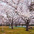 春日賞櫻~米子湊山公園