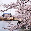 春日賞櫻~琴浦町水邊公園