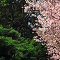 春之天元宮
