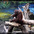 09'0528-[新竹]市立動物園