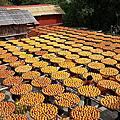 2014-10-25衛味佳曬柿節