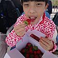 2020寒假(泰安落羽松/步道/水圳/採草莓)