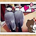 我的可愛鳥兒2012-13