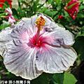 2009/08/30麗星郵輪沖繩之旅(三)