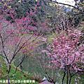 2010/02/15南投杉林溪賞花行