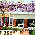 2013 03 30 新北市.淡水.大屯里.紫藤咖啡園.紫色紫藤花