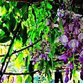 2012 03 31 台北.中正區.植物園.紫藤花