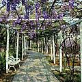 2014 03 新北市.淡水.大屯里.紫藤咖啡園.紫色紫藤花