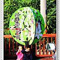 2010 04 30 新北市.土城.桐花