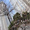 2006春-櫻花