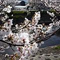 2008 櫻花季