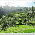 2012峇里島七日遊