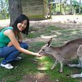 11-15 Lone Pine Koala sanctuary