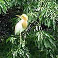 大安森林公園花鳥  +   午餐