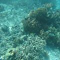 帛琉~海底世界~~