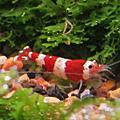 水草缸之魚蝦螺