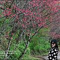 2016-鳳林櫻花步道