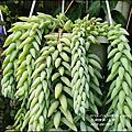 2016-多肉植物