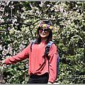 2018-陽明山櫻花季(櫻花、杜鵑、紫藤)