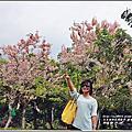 2018-花旗木(鹿鳴溫泉酒店)