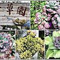 2019-千草園多肉植物