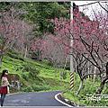 2020-玉山神學院櫻花