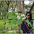 2020-花蓮林務局南華工作站桐花