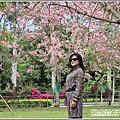 2020-台東鹿鳴溫泉酒店花旗木